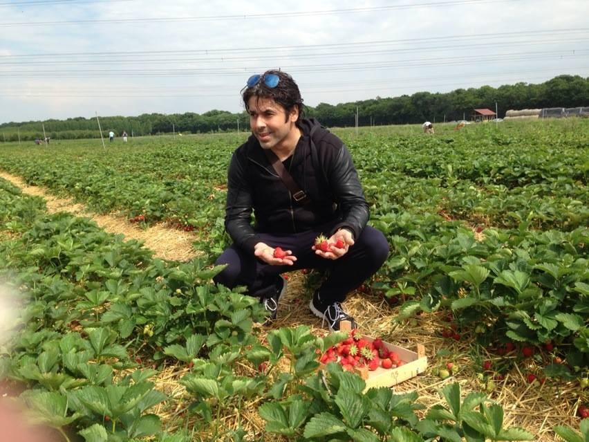 strawberry fields gais