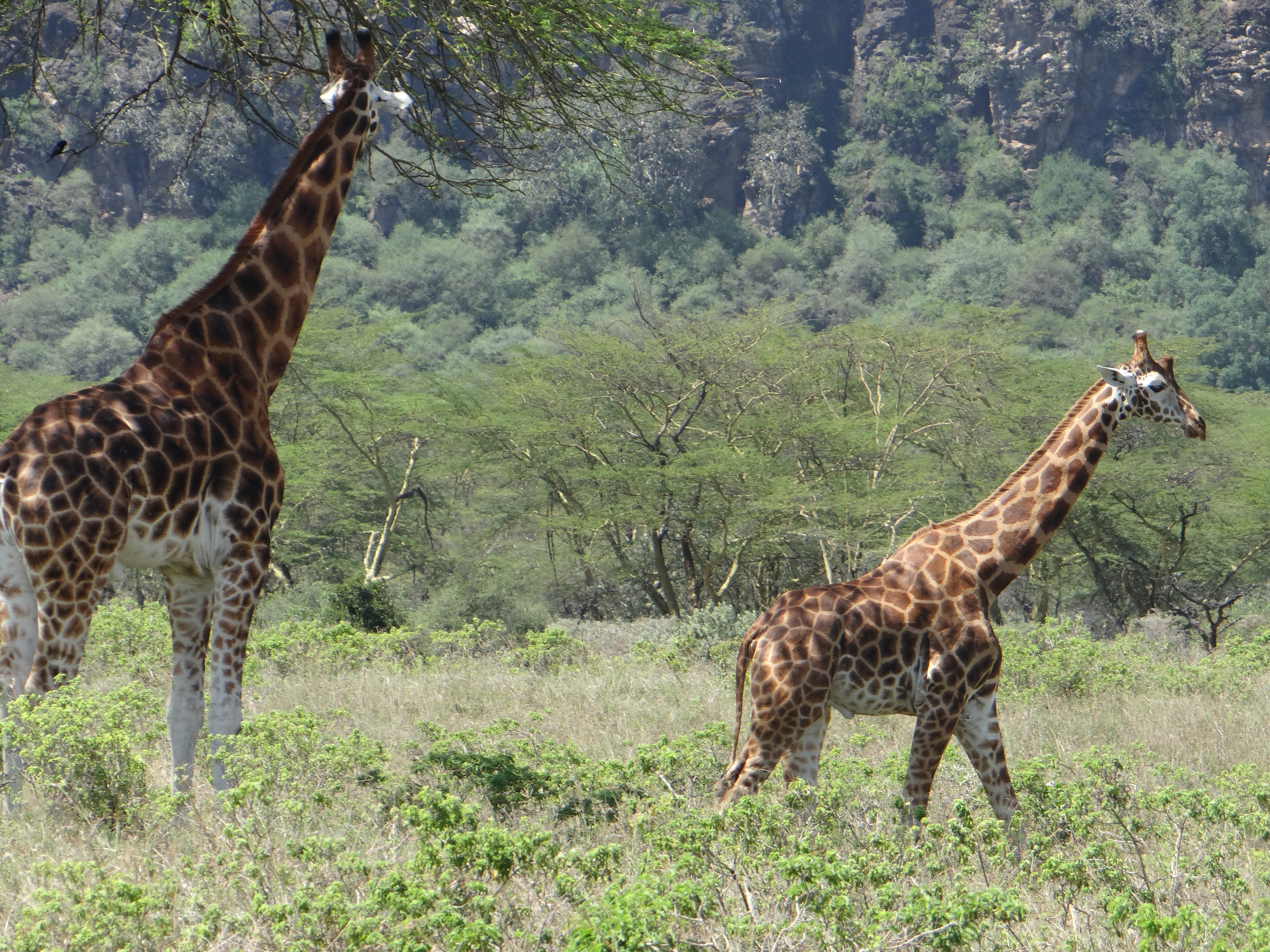 africa, Jambo Africa, Africa Safari, wildlife safari, Lake Elmenteita