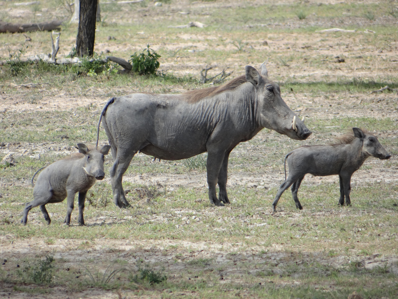 africa, Jambo Africa, Africa Safari, wildlife safari, Lake Elmenteita